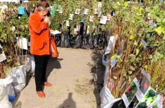 Как выбрать саженцы плодовых деревьев при покупке весной