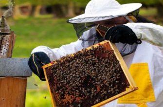 Как сделать отводки пчел весной без матки