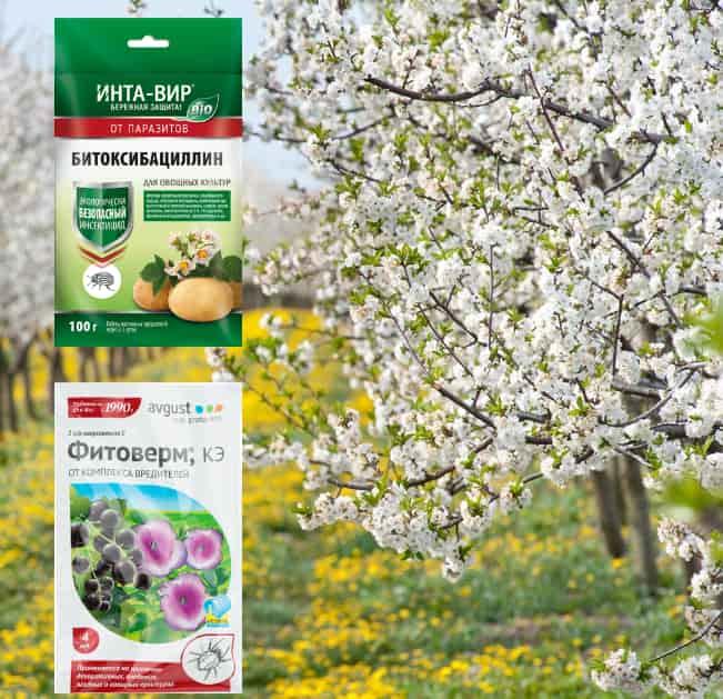 Препараты для обработки цветущих яблонь