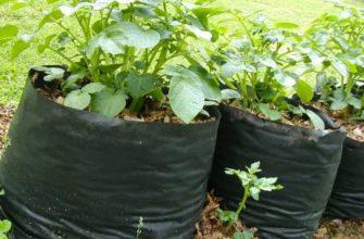 Выращивание картошки в мешке