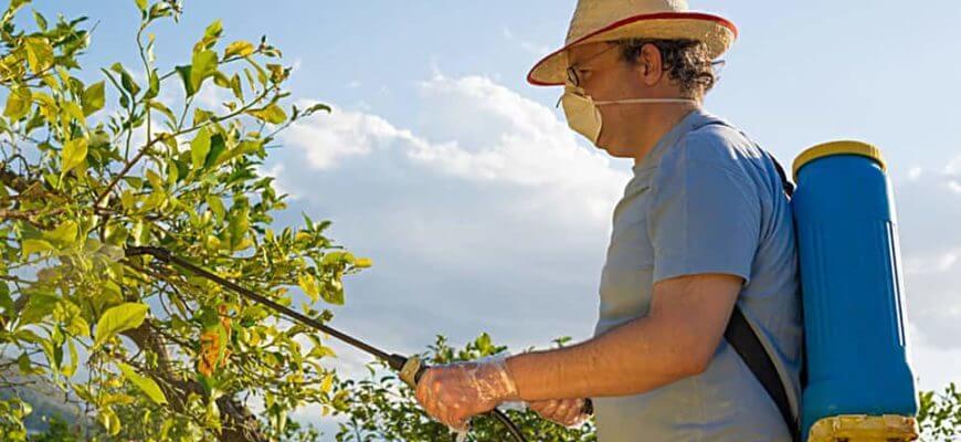Когда и чем опрыскивать плодовые деревья и кустарники весной от вредителей и болезней