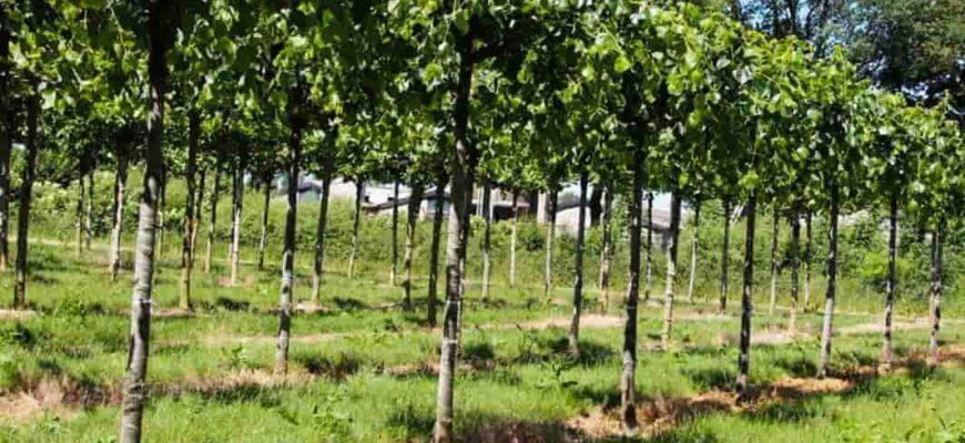 На каком расстоянии сажать друг от друга плодовые деревья