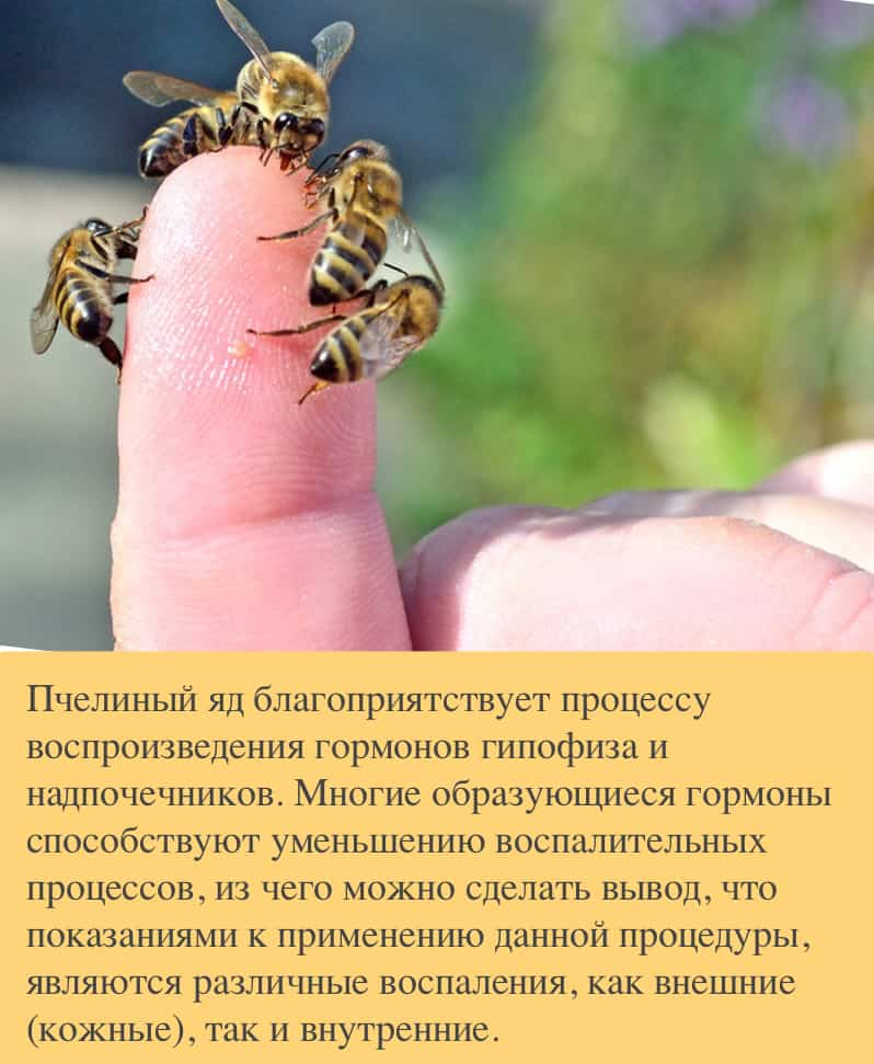 Польза пчелиного укуса
