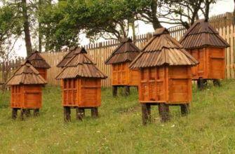 Сколько меда дают пчелы