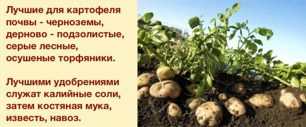 Необходимые условия для грунта при посадке картофеля