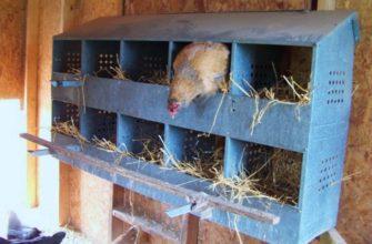 Как сделать гнездо для кур
