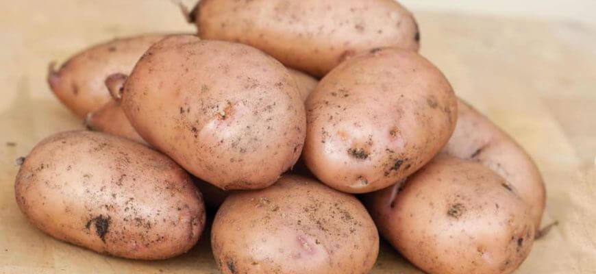 Картофель Жуковский ранний