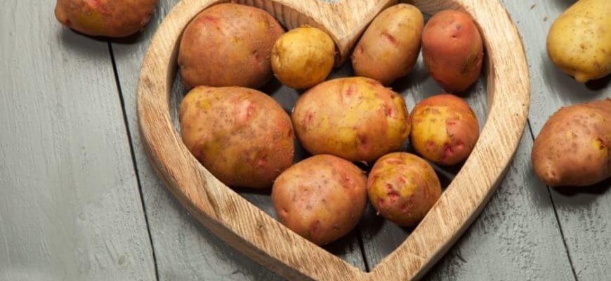 Самые вкусные и урожайные сорта картофеля
