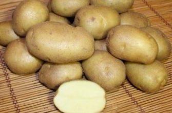 Сорт Картофеля Любимец