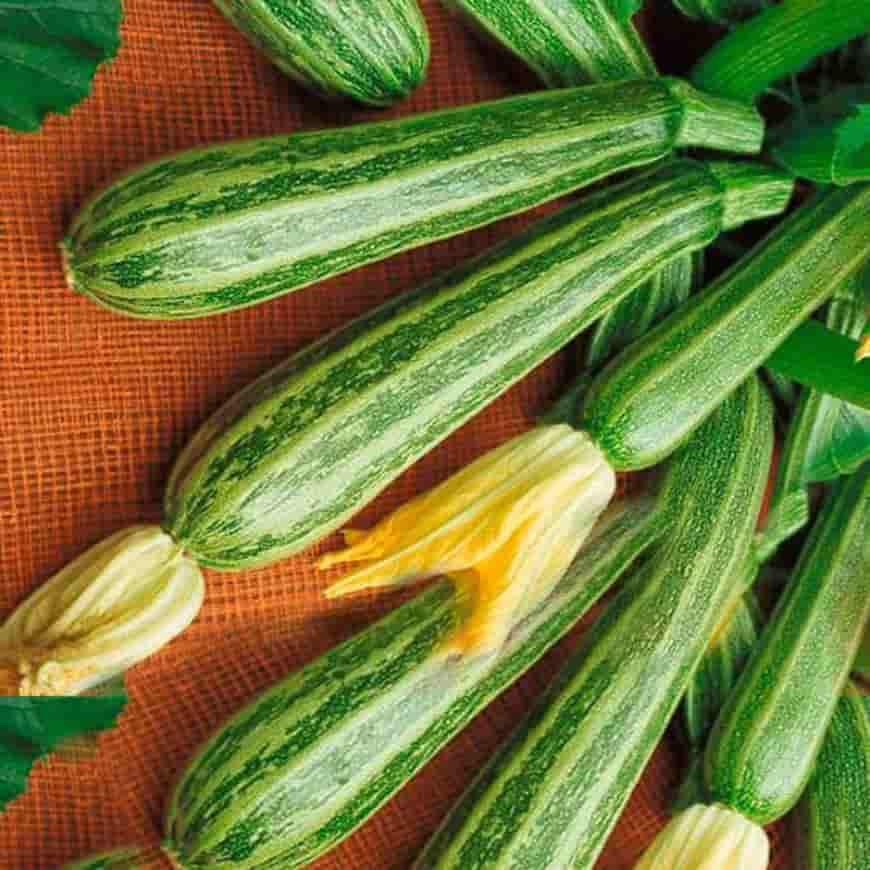 Сорта кабачков Зебра