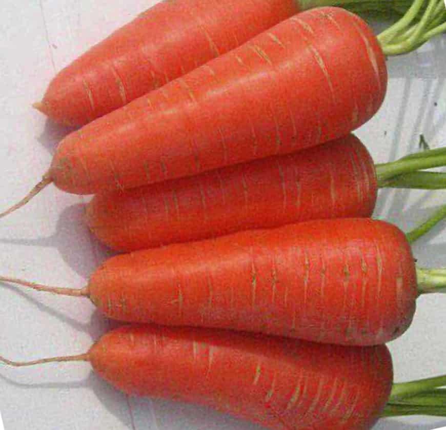 Сорта моркови Аленка