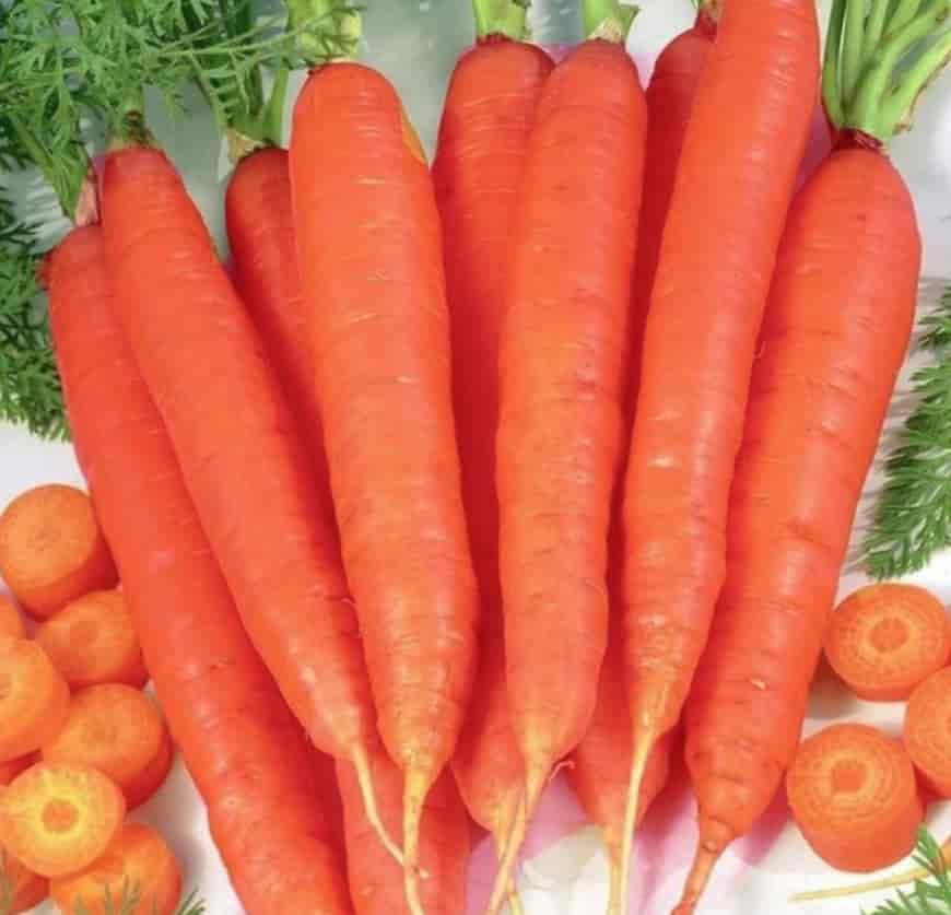 Сорт моркови Артек