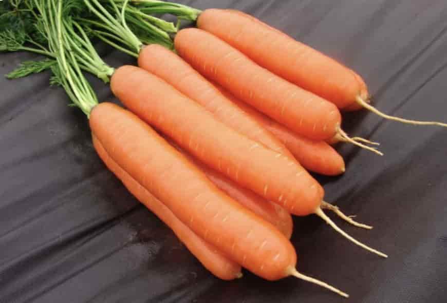 Сорт моркови Дарина