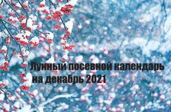 Лунный календарь садовода и огородника на декабрь 2021 года