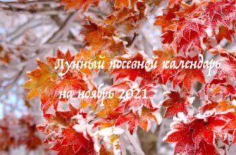 Лунный календарь садовода и огородника на ноябрь 2021 года