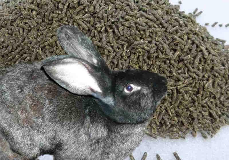Виды кормов для кроликов