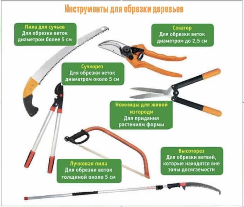 Инструменты для обрезки плодовых деревьев