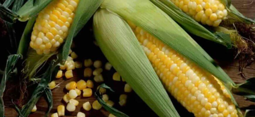 Кукуруза это Овощ