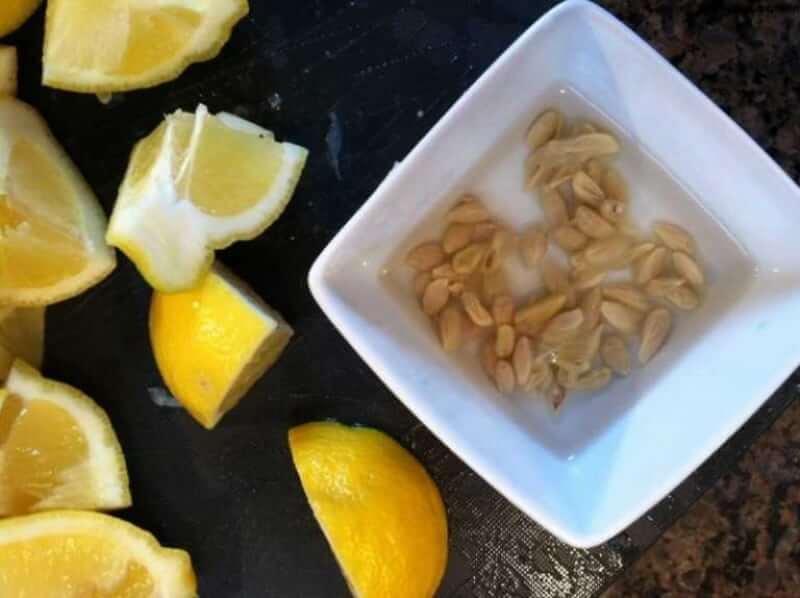 Посадить лимон из косточки в домашних условиях