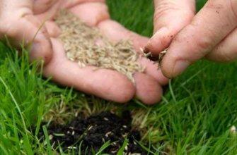 Посевной газон своими руками