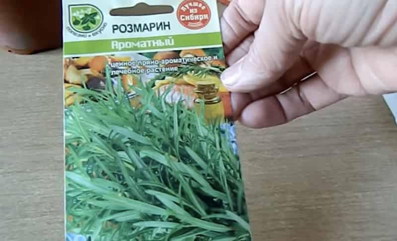 Семена розмарина