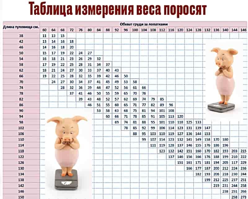 Таблица измерения веса поросят