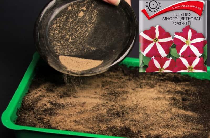 Как вырастить рассаду петунии в песке