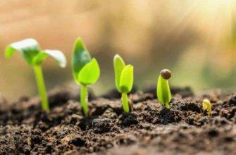Вегетационный период