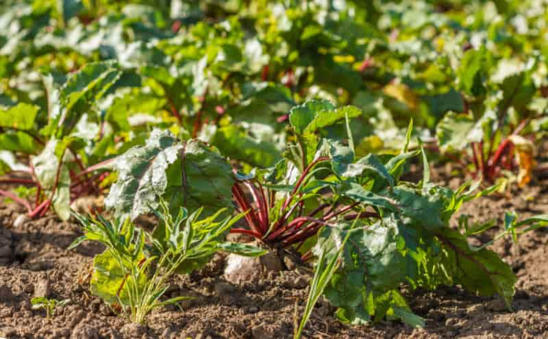 Период вегетации у растений