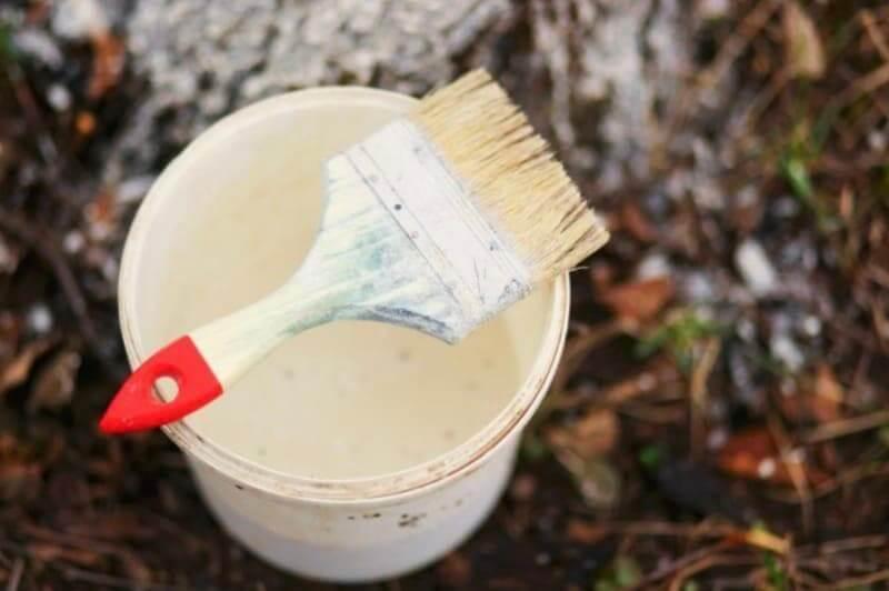 Чем лучше белить стволы деревьев